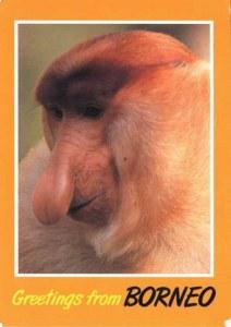 Une carte postale de Borneo (Mathi)