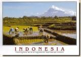 Une carte postale de Banjarmasin (Dito)