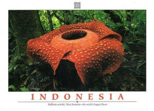 Une carte postale de Bandung (Saumi)