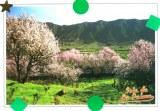 Une carte postale de l'école maternelle de Tijarate