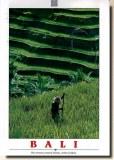 Une carte postale de Bali (Andri)