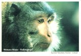 Une carte postale d'indonésie