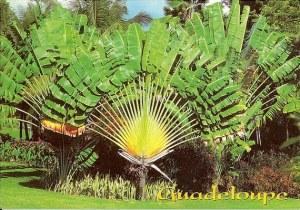 Une carte postale de Guadeloupe (Michel, Virginie, Louis, Dom, Corinne, Chloé)