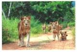 Une carte postale de Chennai (Adrian)