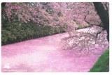 Une carte postale de Fukuoka (Akiko)