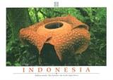 Une carte postale de Jakarta (Yohanna)
