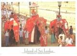 Une carte postale du Sri Lanka (Faustine, Ninon, Léonie, Céline et Laurent)
