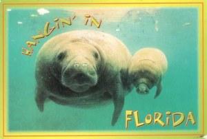 Une carte postale de Sarasota (Charlotte)