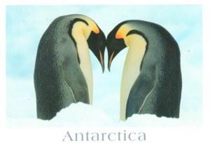 Une carte postale de l'Antarctique