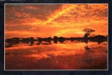 Une carte postale de Colombo