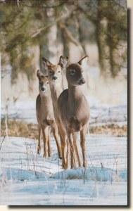 Une carte postale de Minnetonka, MN (Khaki)