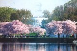 Une carte postale de Washington DC (Belle)