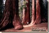 Une carte postale de Modesto, CA (Marlene)