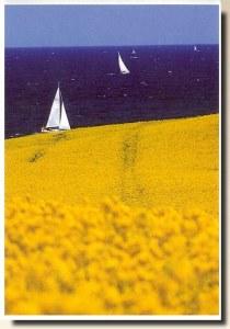Une carte postale de Kiel (Jordis)