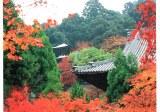 Une carte postale de Kitakyushu (Akiko)