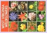 Une carte postale de Virginie-Occidentale (Ellen)