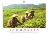 Une carte postale de Kota Bogor (Saumi)