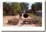 Une carte postale de Bloemfontein (Laurent)
