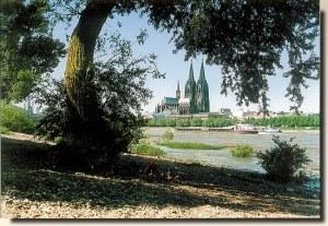 Une carte postale de Cologne (Lili)
