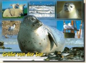 Une carte postale de Butzbach (Stephanie)
