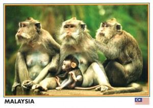 Une carte postale de Kajang (Tini)