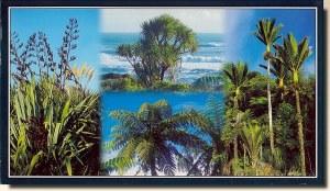 Une carte postale de Greymouth (Annie)