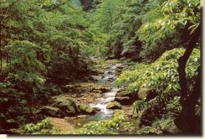 Une carte postale de Wuhan (LongYu)