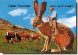 Une carte postale de Tucson, OR (Erika)