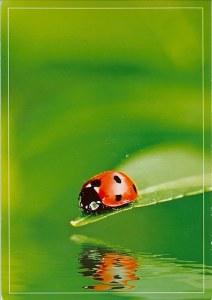 Une carte postale Strijen (Esther)