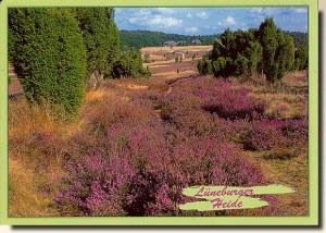 Une carte postale de Soltau (Myriam)