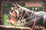 Une carte postale de Jefferson City, MI (Tracy)