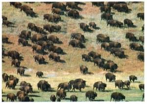 Une carte postale de Sioux Falls (Mérédith)