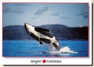 Une carte postale du Petit-Saguenay (Moi)