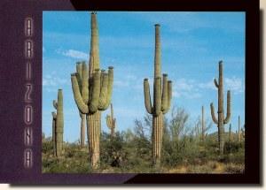 Une carte postale de Glendale, AZ (Carol Williams) 1