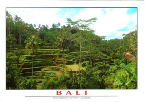 A postcard from Jakarta (Christa)
