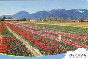 A postcard from Abbotsford (Amanda)