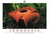 A postcard from Bandung (Saumi)
