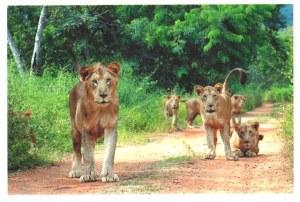 A postcard from Chennai (Adrian)