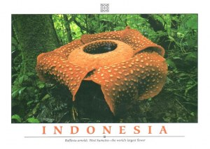 A postcard from Jakarta (Yohanna)