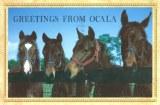 A postcard from Ocala (Tara)