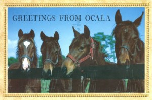 A postcard from Ocala (Tara)