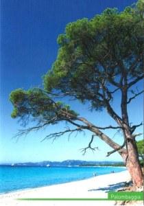 A postcard from Porto-Vecchio (Cécile)