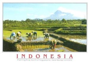 A postcard from Jakarta (Sophia)