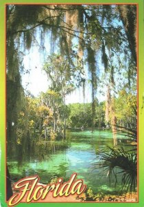 A postcard from Florida, FL (Charles)