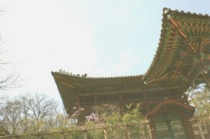 A postcard from Suwon (Julie)