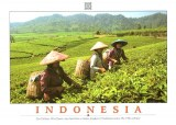 A postcard from Koto Bogor (Saumi)
