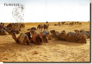 A postcard from Tunisia (Corinne, Manu, Max & Julie)