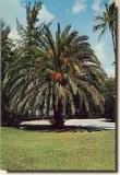 A postcard from Melbourne, FL (George)