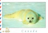 A postcard from Ridgetown (Carole)