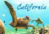 A postcard from Santa Ana (Alisa)